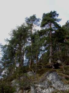 Gozd (foto: D. Klenovšek, arhiv ZRSVN).